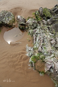 seaweed and sun reflected in rock pools at Rhossili Bay