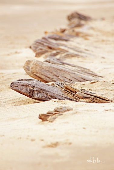 driftwood from a shipwreck on Rhossili Bay South Wales