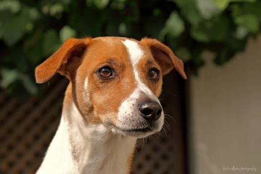 pet-photograph-dog-family
