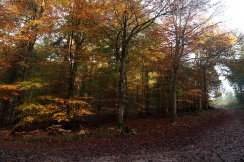 Forest of Dean