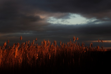 sunset at Newport Wetlands