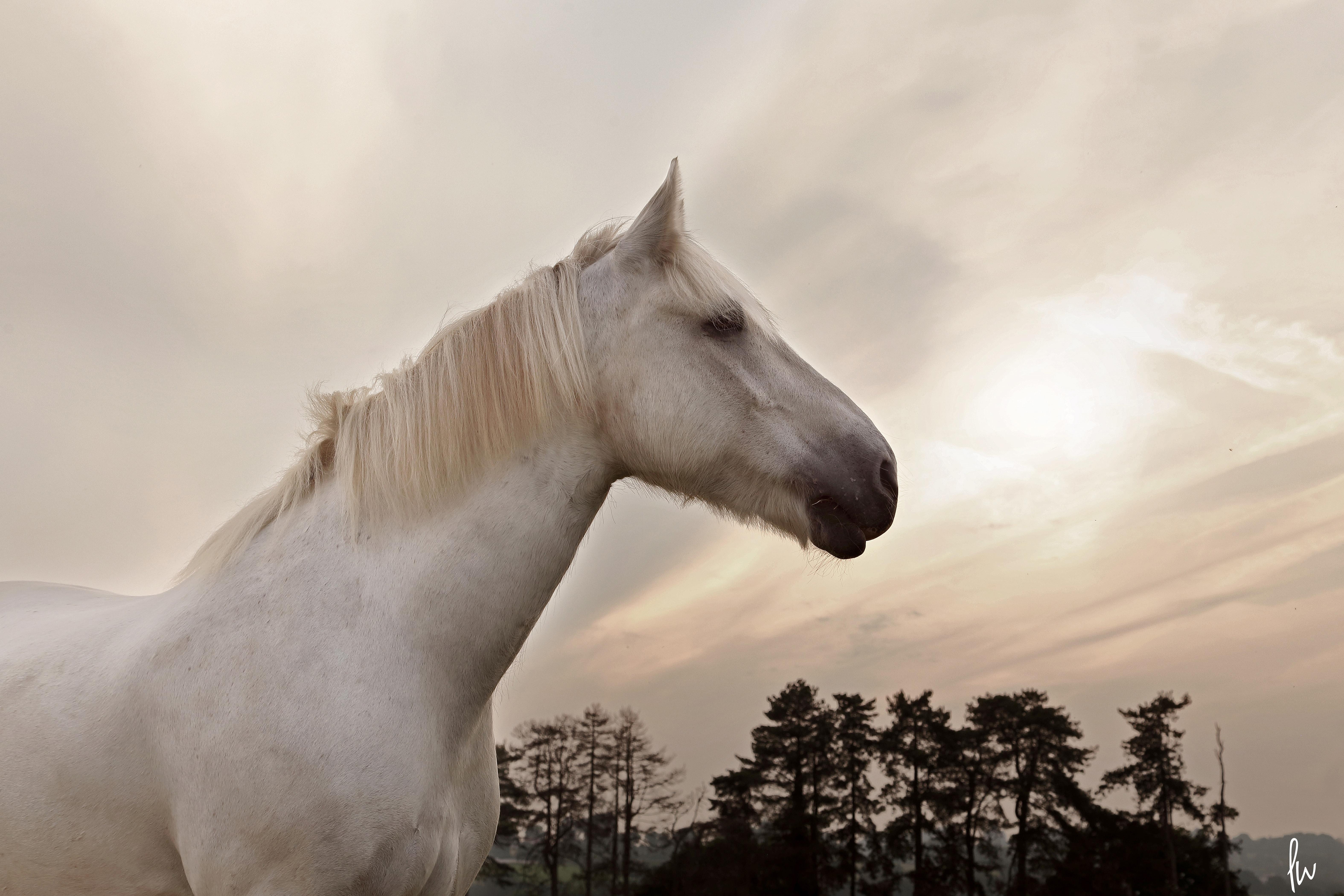 equestrian-horse-photographer-chepstow