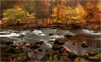 rydal-water-autumn