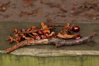 conkers-