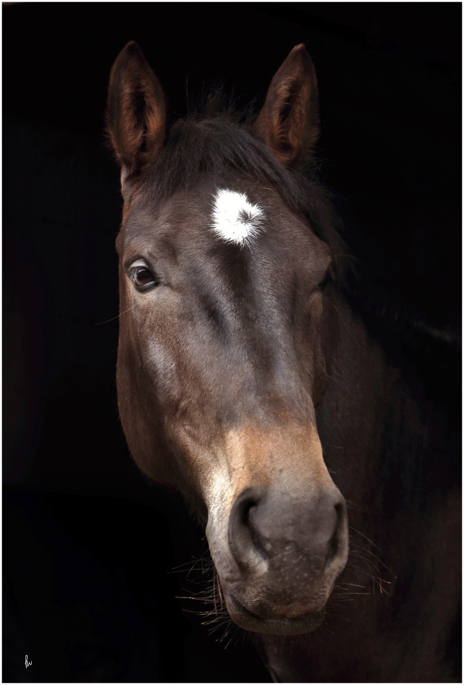 low key portrait of a horse